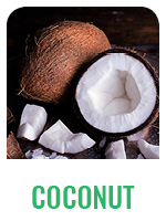 Wildology Coconut