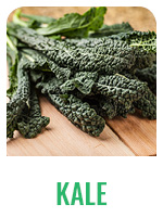 Wildology Kale