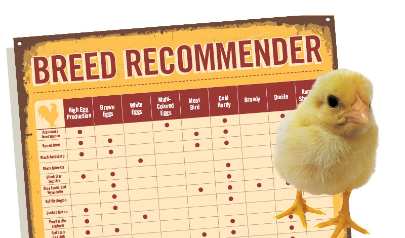 Chicken Breed Selector