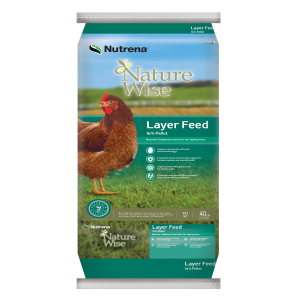 Layer 16% Pellets Poultry Feed - Non Medicated
