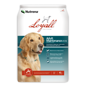 Adult Maintenance Dog Food 21/14