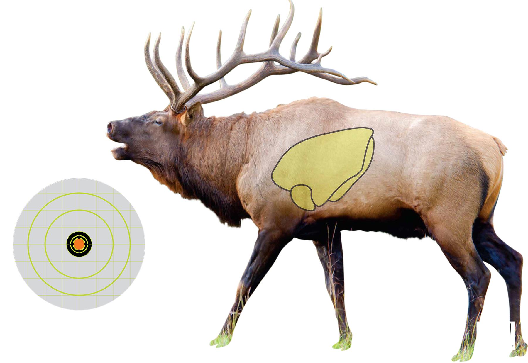 Murdoch S Shooting Made Easy Vital Point Elk Target