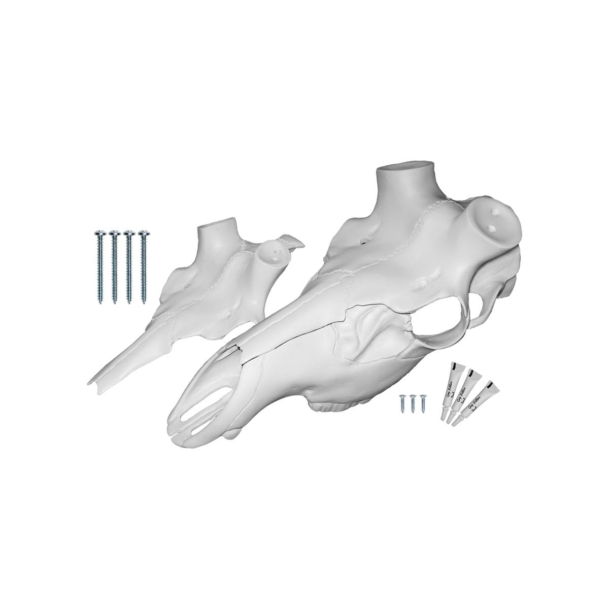 Skull Master Kit European Deer Antler Attachment Mounting Universal Wall Decor