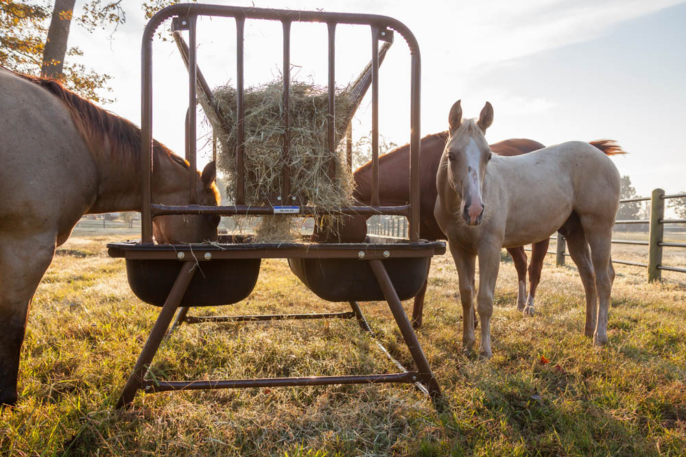 Pasture Horse Feeder With Hay Rack