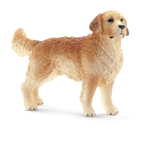 Golden Retriever Male