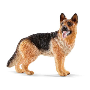 German Shepherd Female