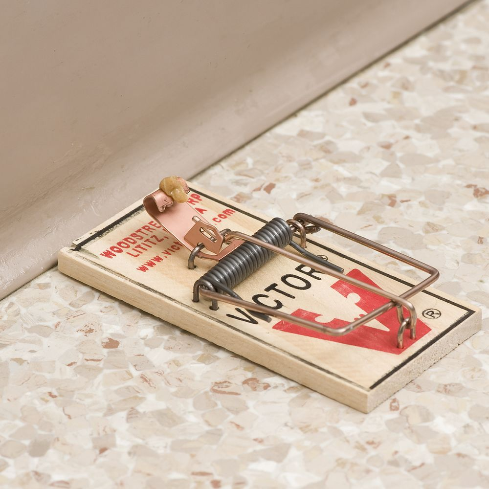 Rodent Control 20  m150 Victor Snap Spring Wooden  Mouse Trap