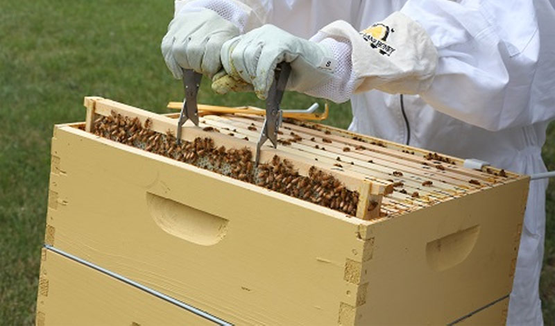 The 8 Time-Tested Parts of a Beekeeper Hive