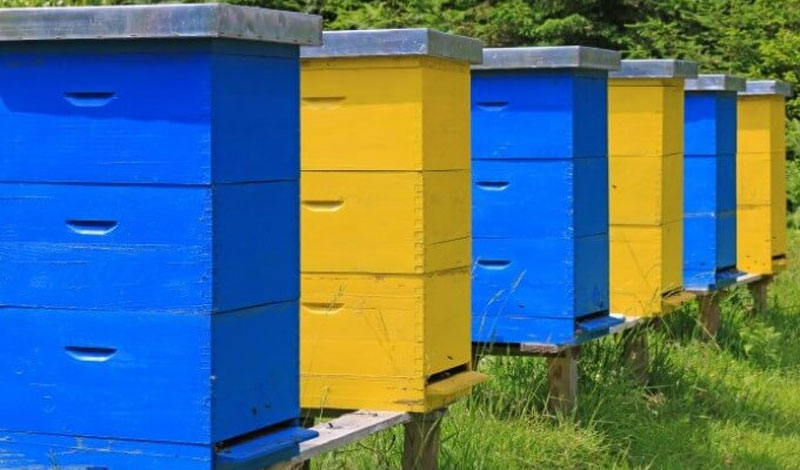 The Best Location For Beehives on Your Property