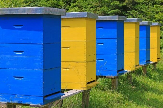 Find The Best Location For Beehives on Your Property