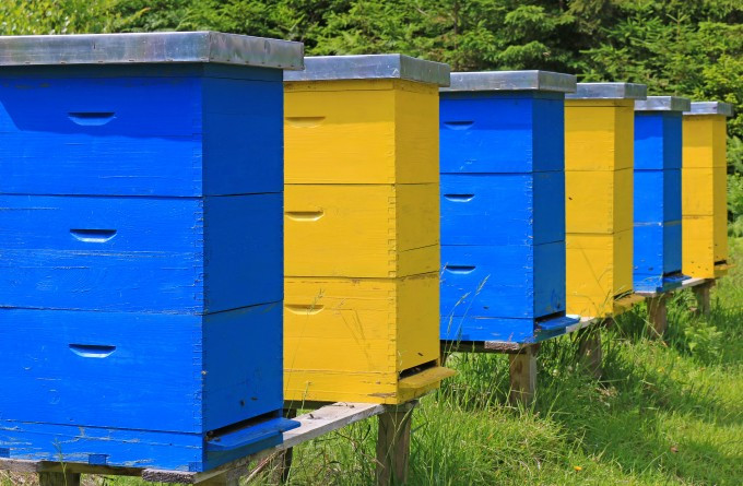 find the best location for beehives