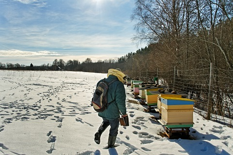 how to winterize beehive