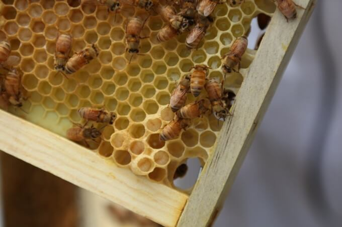 Bee Roles: Do You Really Know What Happens Inside A Beehive?