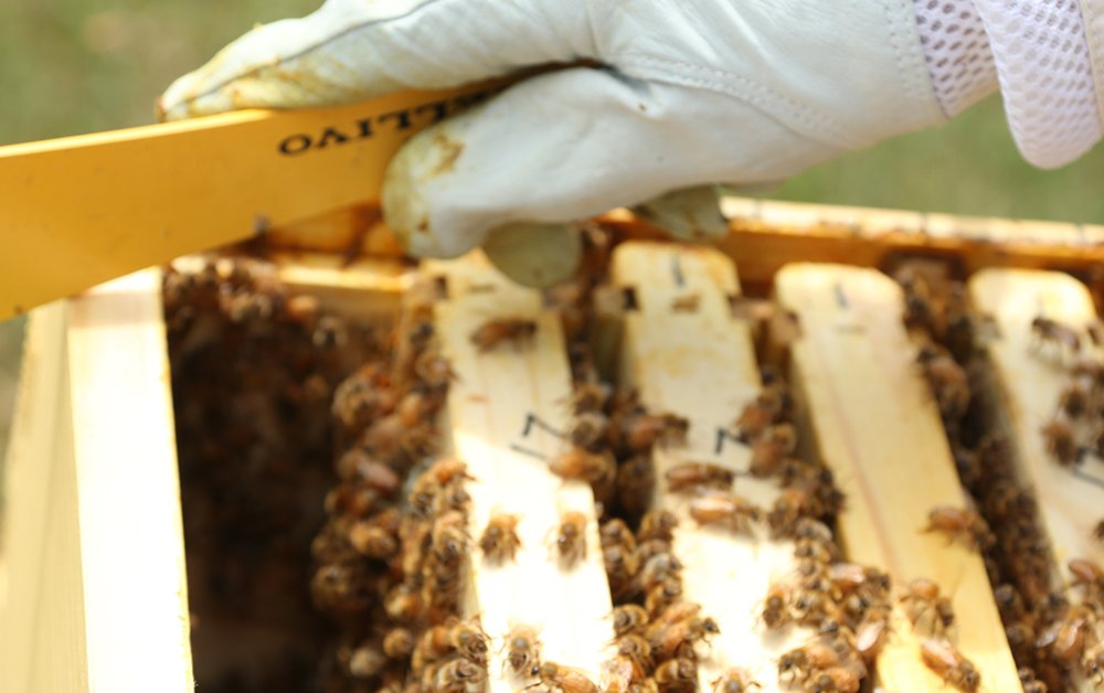 prevent swarming learn how to split hive