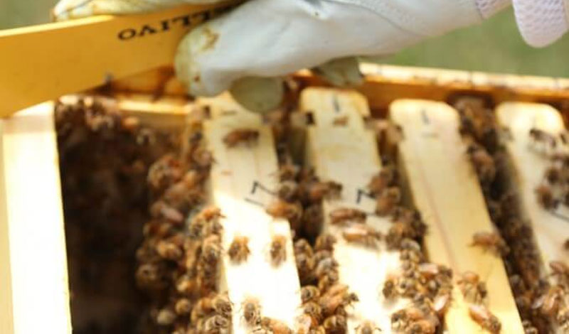 Prevent Swarming: Learn How to Split a Hive