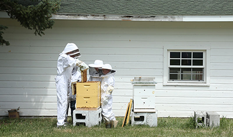 Registering  Your Beehives