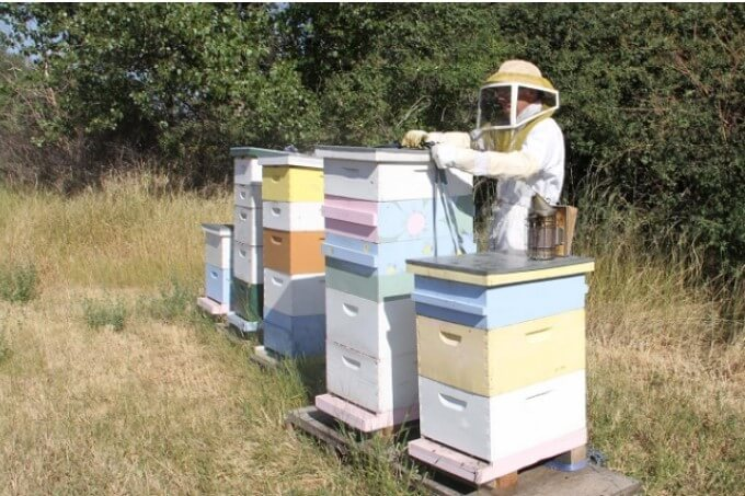 When to Add Honey Supers to a Standard Hive