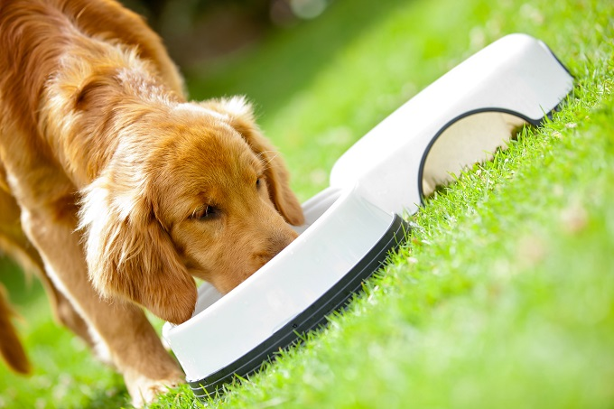 5 common dog food and nutrition questions