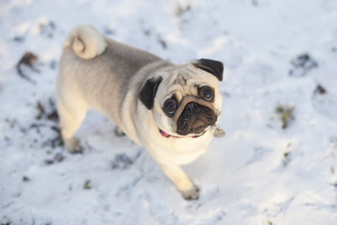 must have winter gifts for small dogs