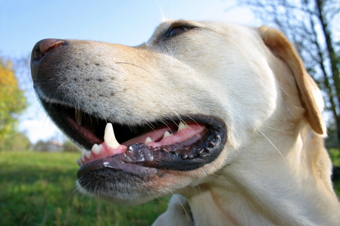healthy mouth for dogs