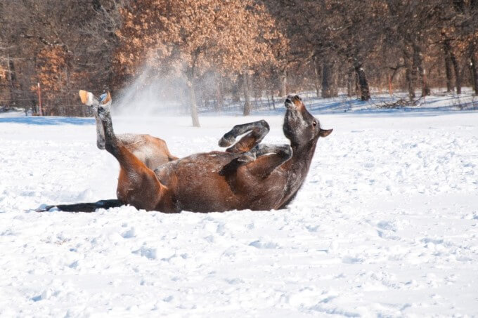 Prevent Winter Horse Colic with Tips from Nutrena