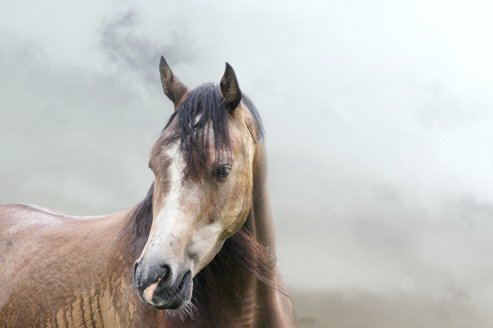 wildfire smoke and horse health