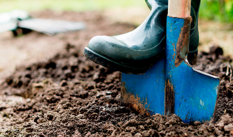 Choosing the Right Soil