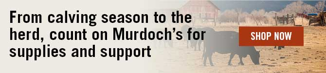 From Calving season to the herd, count on Murdoch's for supplies & support