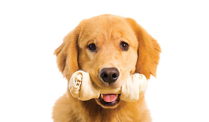 dog sales