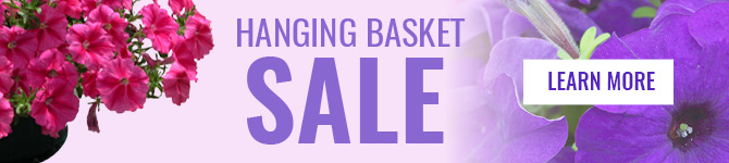 Hanging Basket Sale